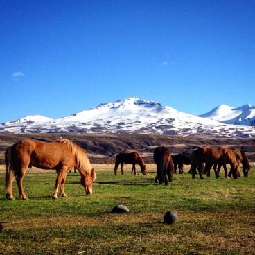 Thorsmork Icelandic horses