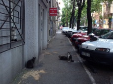Now I know where all of Croatia's stray cats went